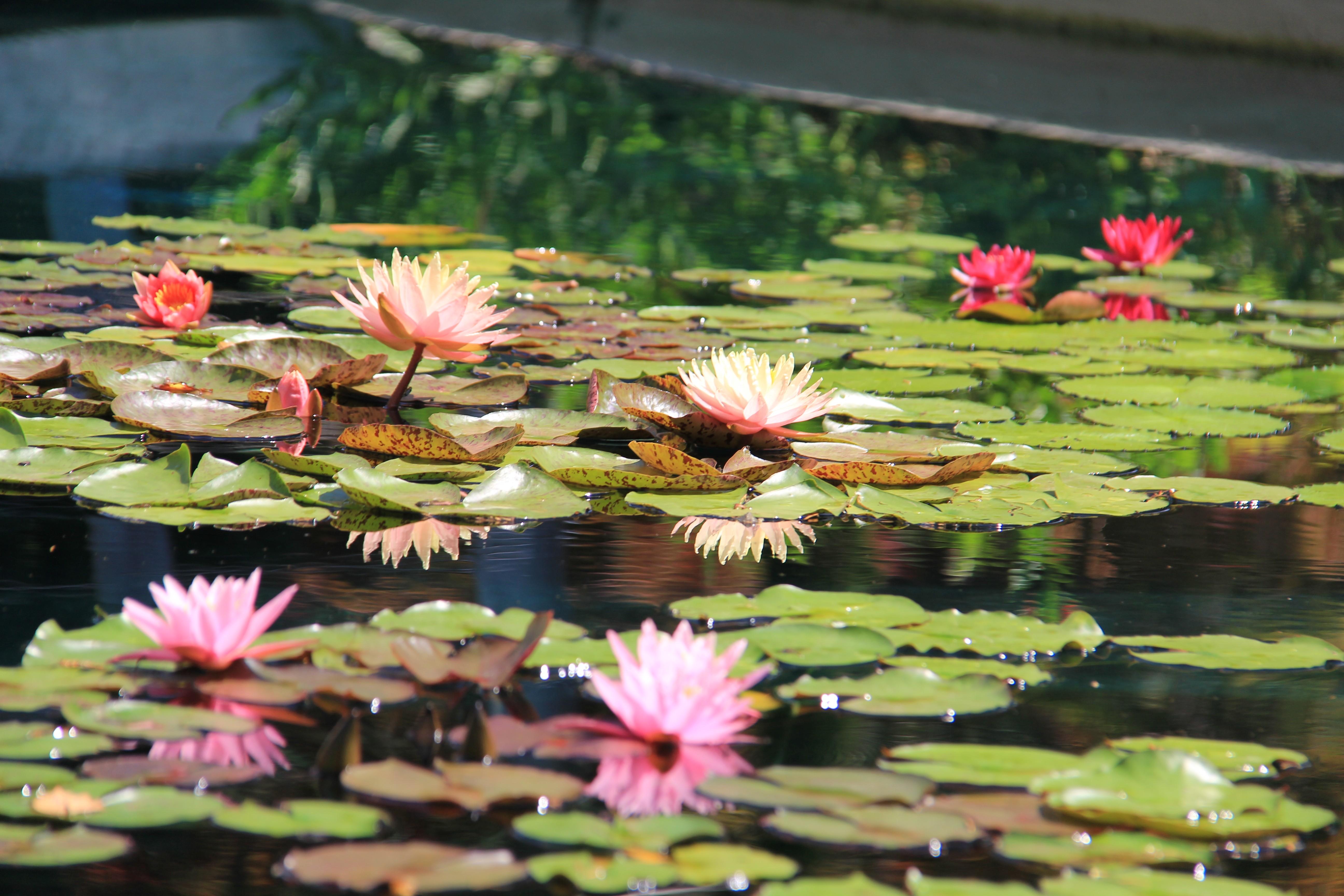 1596137993705?e=2159024400&v=beta&t=fwT1gRZzRnMZs59a q C23IZQzYpBU4DepbF iNktgk - Royal Botanical Gardens 680 Plains Road West Burlington On Canada
