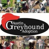Austin Greyhound Adoption Linkedin