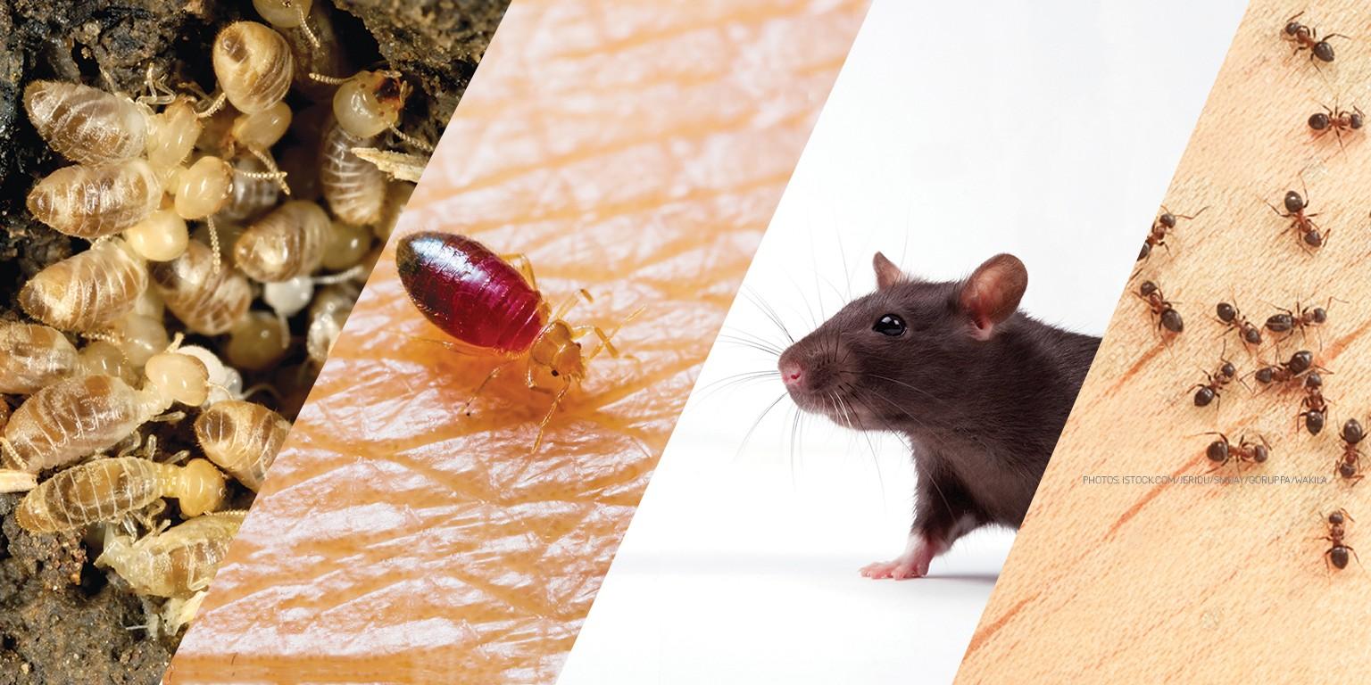 Pest Management Professional | LinkedIn