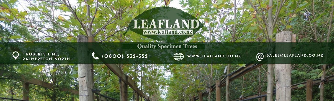 Leafland Quality Specimen Trees Linkedin