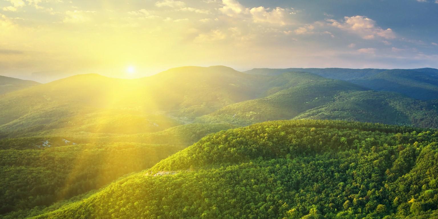 Sunshine Mills, Inc. | LinkedIn