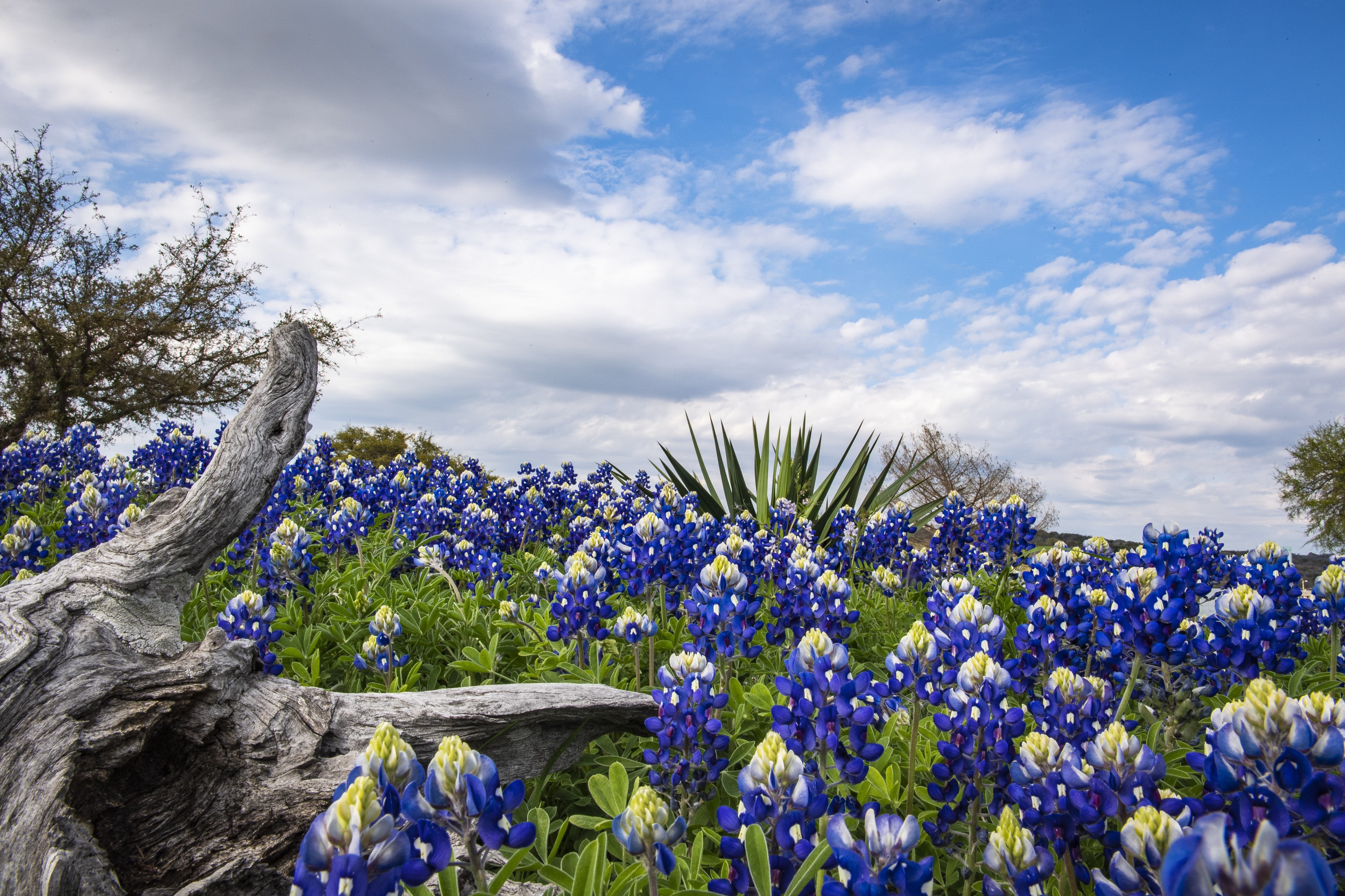 Texas Parks and Wildlife Department | LinkedIn