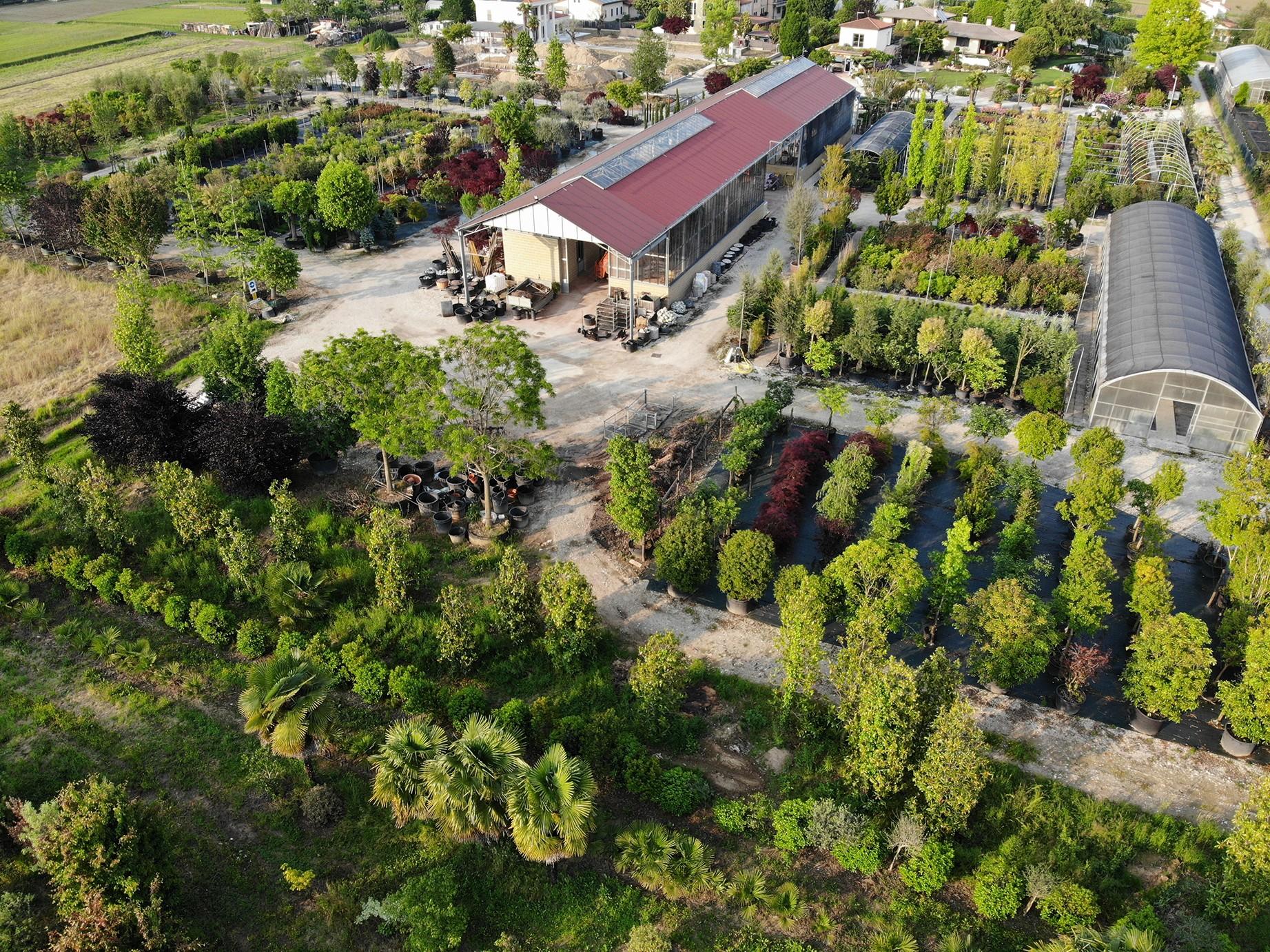Piante Da Frutto Nane le piante di tapparello vittorio   linkedin