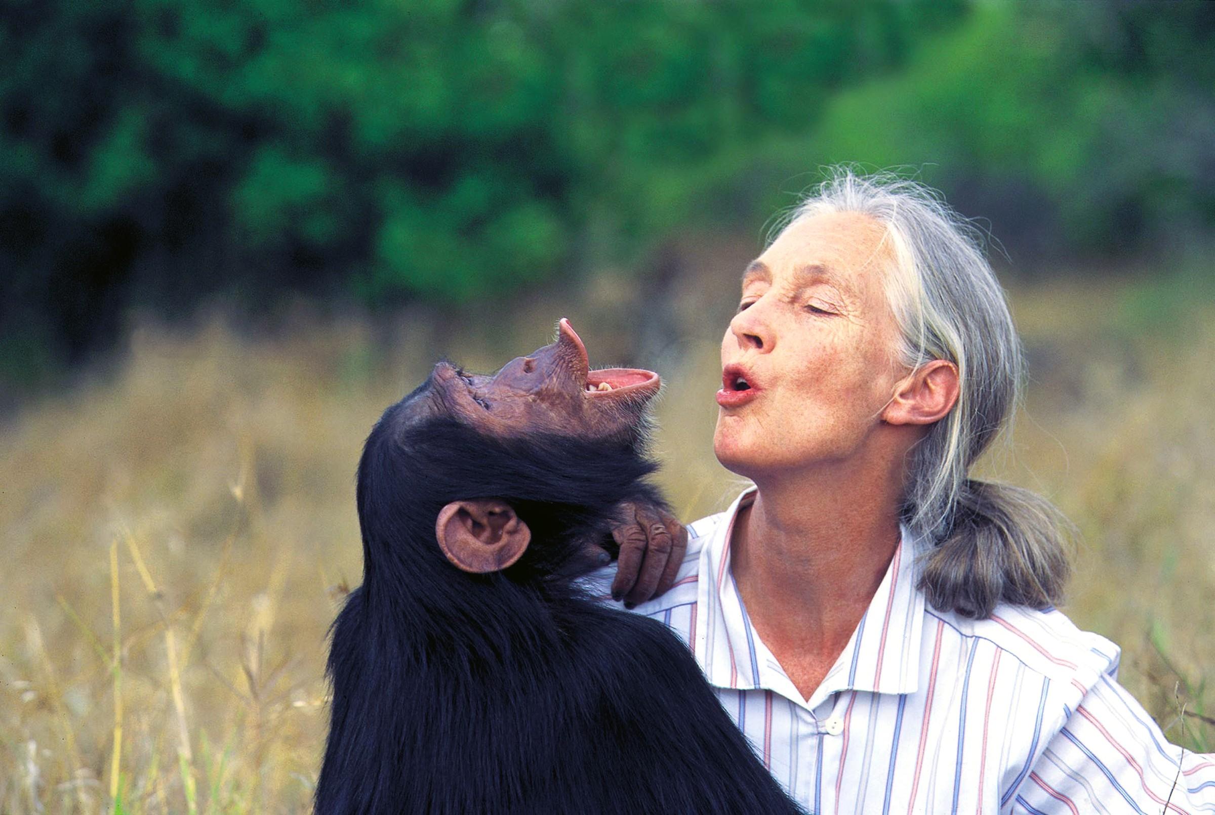 The Jane Goodall Institute Australia | LinkedIn