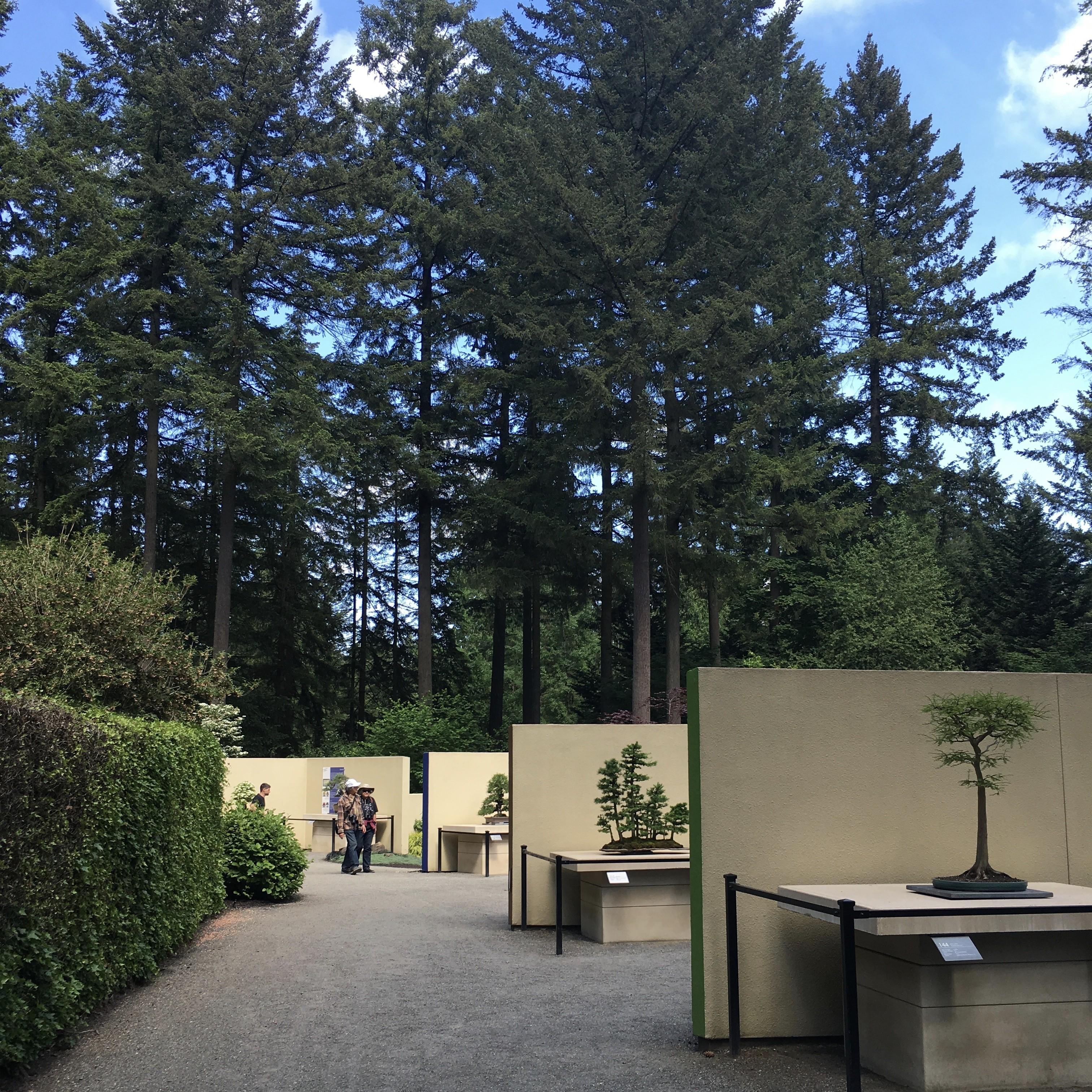 Pacific Bonsai Museum Linkedin