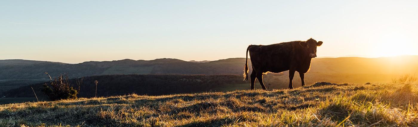 Lakeland Farm And Ranch Direct Linkedin