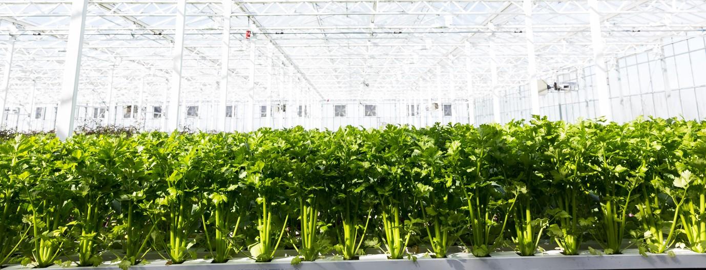 Lufa Farms Inc Linkedin