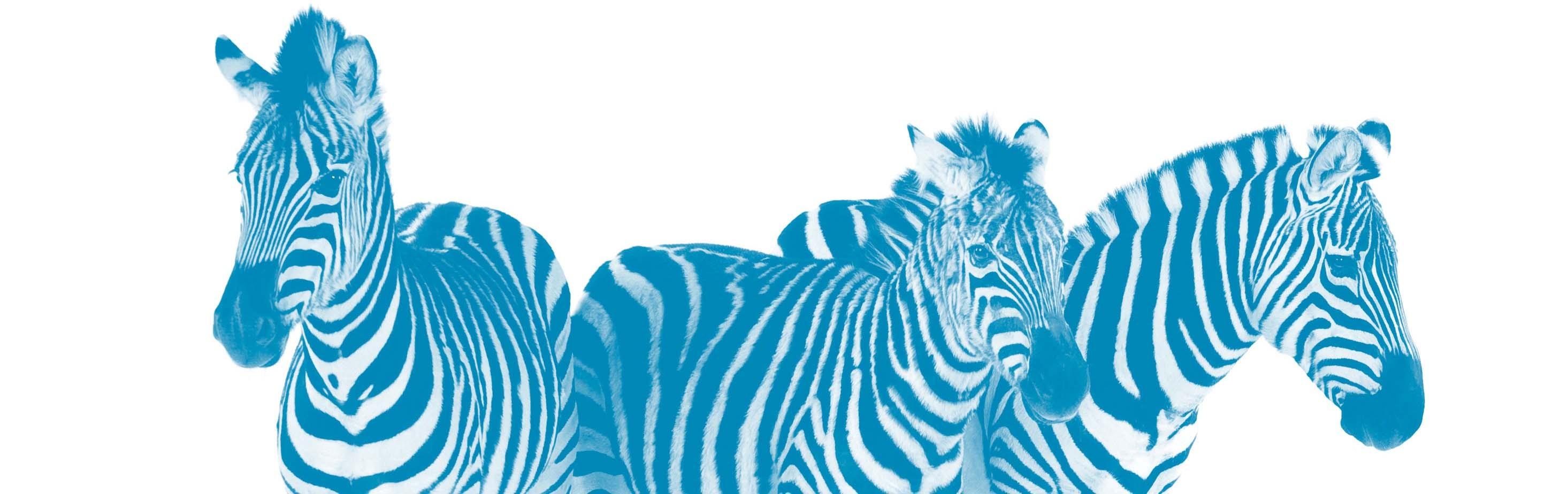 Blue Zebra Insurance Linkedin
