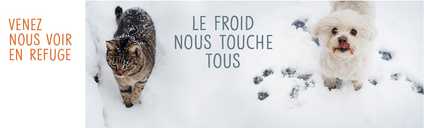 La Societe Protectrice Des Animaux Spa Linkedin